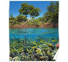 Split image mangroves and shoal of tropical fish Poster
