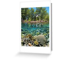 mangrove trees above waterline and coral reef underwater Greeting Card