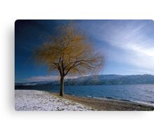 Weeping willow Canvas Print