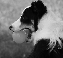 Buddy and his Ball by CrisPizzio