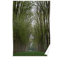 Tall Trees in the Gardens of the Palace of Versailles Poster
