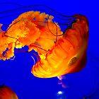 Oceanic Grace by Angela Bashline