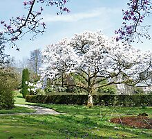 Lanhydrock Blossom  by Neil Cox