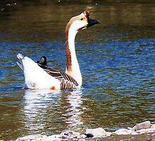 Chinese Swan Goose. by artfulvistas