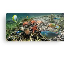 Panorama on a coral reef with fish and starfish Metal Print
