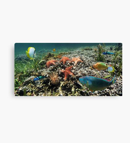 Panorama on a coral reef with fish and starfish Canvas Print