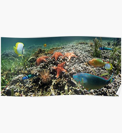 Panorama on a coral reef with fish and starfish Poster