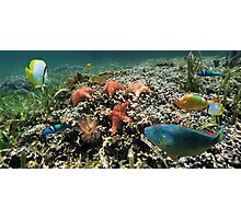 Panorama on a coral reef with fish and starfish Photographic Print