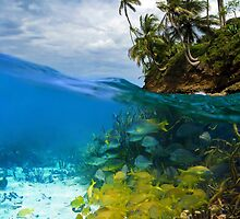 Shoal of fish and tropical shore with coconut trees by Seaphotoart