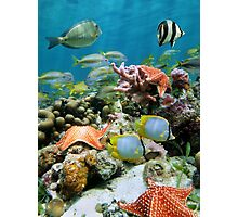 Underwater coral reef with starfish and colorful fish Photographic Print