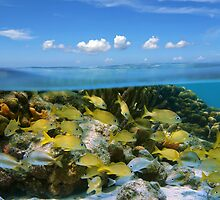 Tropical fish in a coral reef and blue sky with clouds by Seaphotoart
