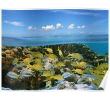 Tropical fish in a coral reef and blue sky with clouds Poster