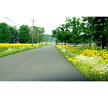 SPRING along my road.......everywhere!!! Photographic Print