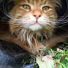 cat in a bag by Jon Harbottle