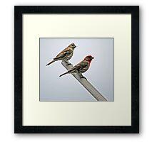 Bird Parents Framed Print