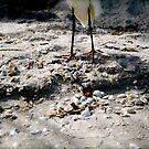 Sanibel Bird Legs by greg1701