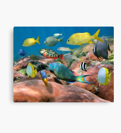 Colorful tropical fish schooling over coral Canvas Print