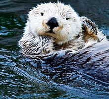 Sea Otter by Dave  Knowles