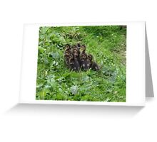 duckling follow the leader Greeting Card