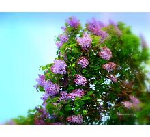 Lilac in the Sky Photographic Print
