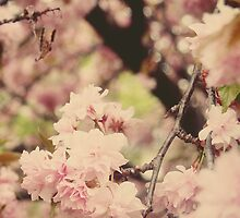 Cherry Blossom II by LeilaBlake