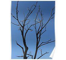 Tree Branch- Salt Marshes  Poster