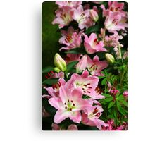A Field of Lilies Canvas Print