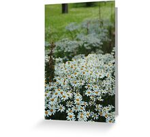 Daisies as Far as you can See Greeting Card