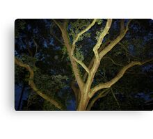 Charleston Oak Canvas Print
