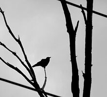 Bird on a Wire by herelaine