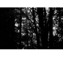 Inspired by the Twilight series Photographic Print
