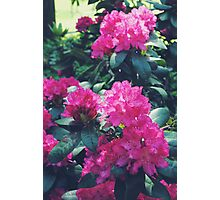 Flower Print Nature Tropical Summer Photographic Print