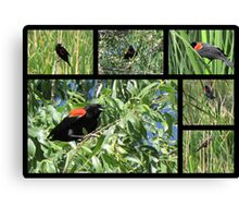 Red-winged Blackbird ~ Collage Canvas Print