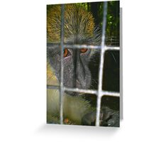 Green Monkey - Wildlife Reserve (Barbados) Greeting Card