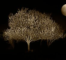 blossoms in the night by Vilma Bechelli