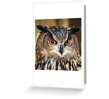 European Eagle Owl, Hypnotic eyes! Greeting Card