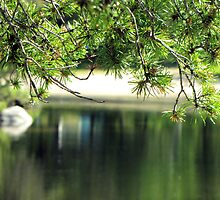 PRISTINE  PINES  by Marie  Morrison