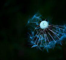 dandedarkness by Jenny Miller