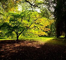 Acer Glade by Dave  Knowles