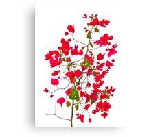 Red petals flowers Canvas Print
