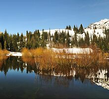 Beaver Ponds Big Cottonwood Canyon by Ryan Houston