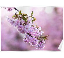 Spring Blush Poster