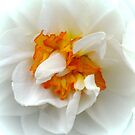 Gold on White by AnnDixon