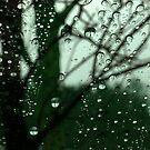 Tree In Rain by mooselandtours