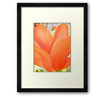 Beautiful Petals Framed Print