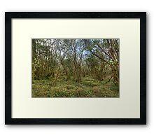 Burren Forest Framed Print