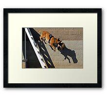 K9 Galt Police Dog Framed Print