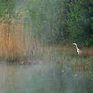 A heron in morning haze by jchanders