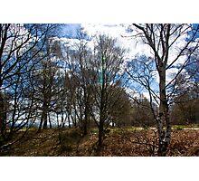 Trees #1 Photographic Print
