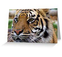 Tiger up Close - Wildlife Heritage Foundation Greeting Card